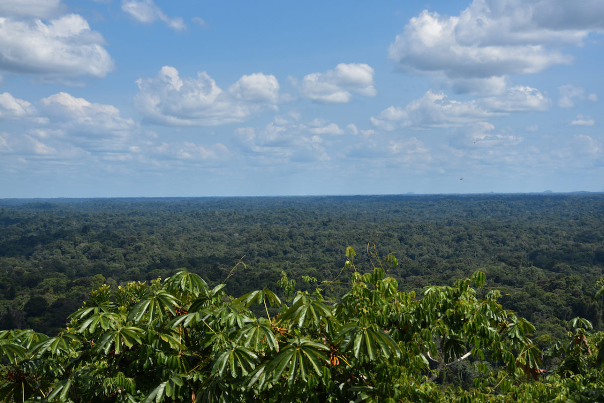 grüne Landschaft, Dschungel, Suriname