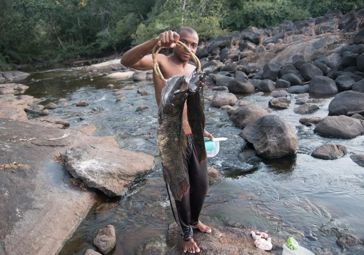 Fische, Surinamriver, angeln