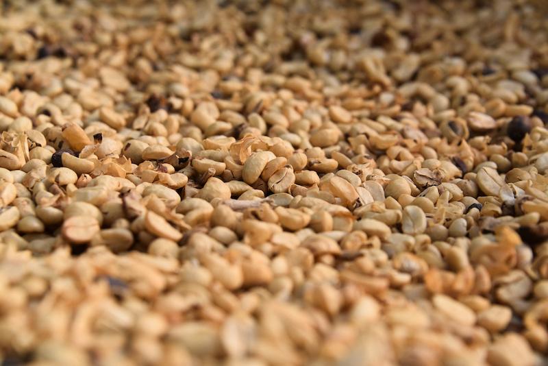 Coffee beans - Don Juan