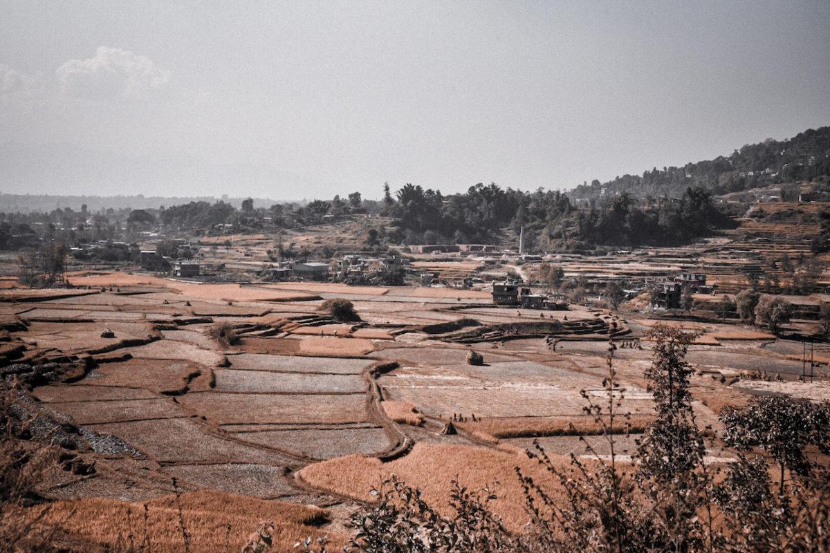 Reisfeld Nepal